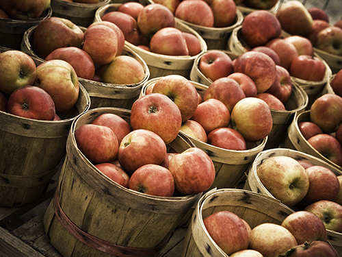Apple Festival Invites Boomers to Celebrate Fall